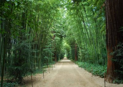 A flat dirt road with high bamboo.